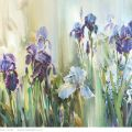 Irises in the silence