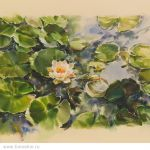 Картина Water lily