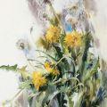 May. Dandelions