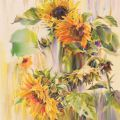 Dance of sunflowers